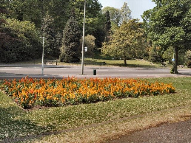 Flowerbed - Preston Park