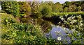 J3067 : Spring, River Lagan, Drumbeg by Albert Bridge