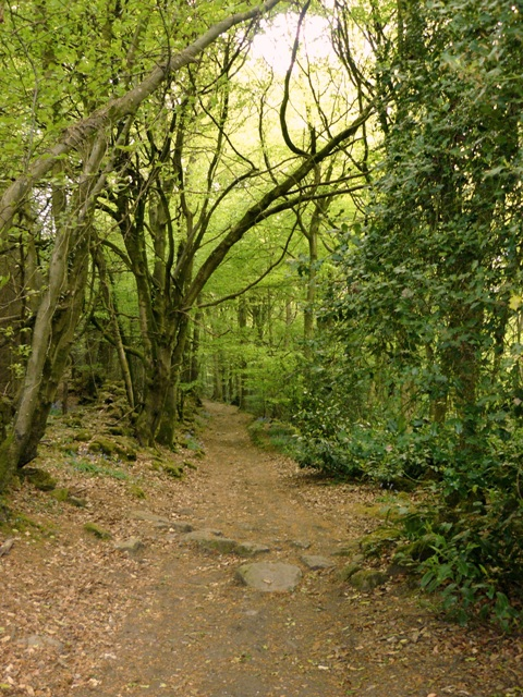 Woodland along the Wye Valley Way