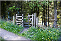 SD7217 : An invitation to walk in the woods by Ian Greig