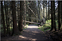 SD7217 : This path's going to need a bit of agility by Ian Greig