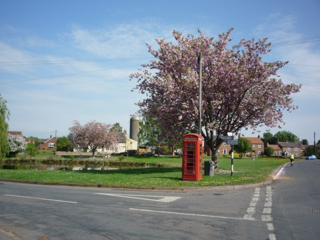 Cherry blossom in Tholthorpe