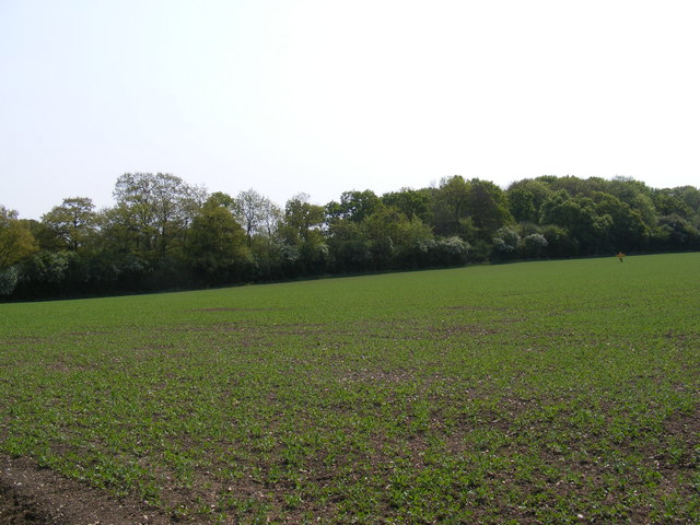 Fields next to the footpath to Glemham Road