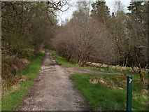 NM8363 : Path junction in Ariundle Nature Reserve by Trevor Littlewood