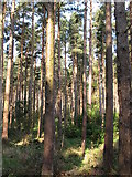 J3629 : Trees in Donard Wood by Eric Jones
