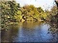 TQ3928 : Fish Pond Putlands Wood by Paul Gillett