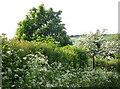 SU0725 : Dressed in white, Mill Lane by Maigheach-gheal