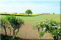 SO6523 : Arable scene near Bromsash by Jonathan Billinger