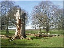 TQ2173 : Dead trees in Richmond Park by Marathon