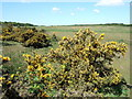 TF8232 : Syderstone Common in Norfolk by Richard Humphrey
