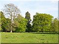 NT1266 : Parkland trees near Kirknewton by M J Richardson