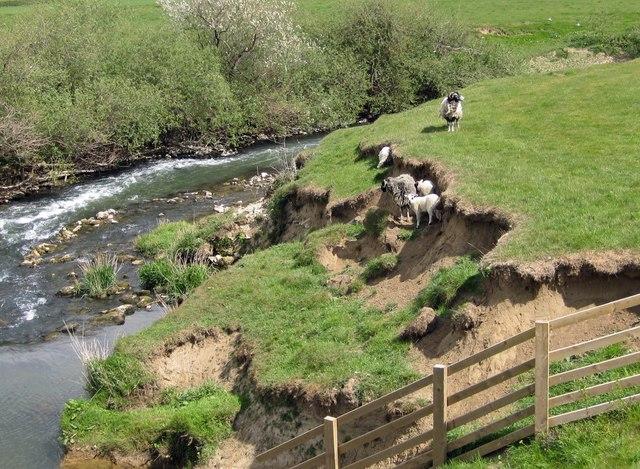 Eroding river bank