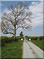SO2179 : Ash tree by Jonathan Wilkins