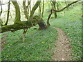 SN0333 : Footpath in woodland in the Gwaun valley on May Day by Jeremy Bolwell