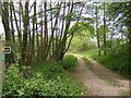 TM2854 : Footpath to Grove Road by Adrian Cable