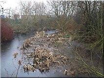 TQ0476 : River Colne by Derek Harper
