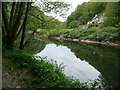 SN2042 : Ruined cottage in the Teifi gorge below Cilgerran by Jeremy Bolwell