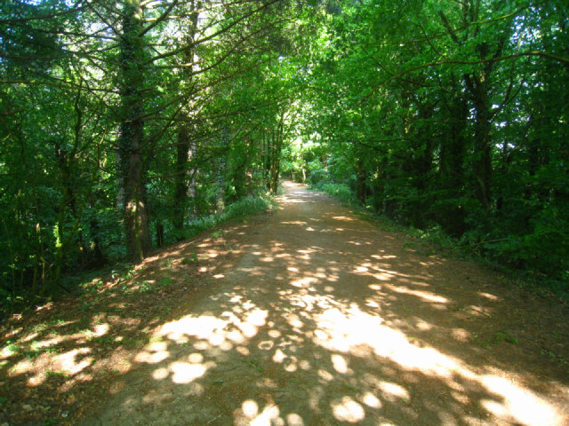 Path behind Stratfield Road houses by Sandy B