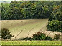 TQ3710 : Slope descending towards Bunkershill Plantation by Trevor Littlewood