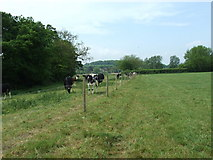 ST9102 : Stour Valley Way, Spetisbury by Lorraine and Keith Bowdler
