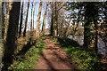 SJ4162 : Riverside Walk near Eccleston by Jeff Buck