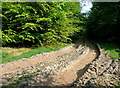 SP8400 : Track in Monkton Wood by Graham Horn