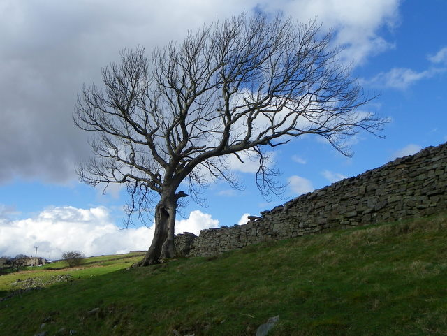 Drystone wall near Whaw