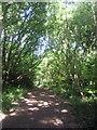 TQ2373 : Woodland path on Putney Heath by Marathon