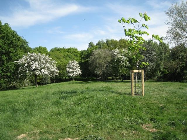 Mill Mound, Yarningale Common