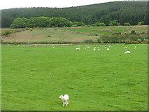 NR9130 : Pasture at Shiskine by M J Richardson