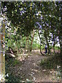 TM2546 : Footpath to Hill Farm & Martlesham Creek by Geographer