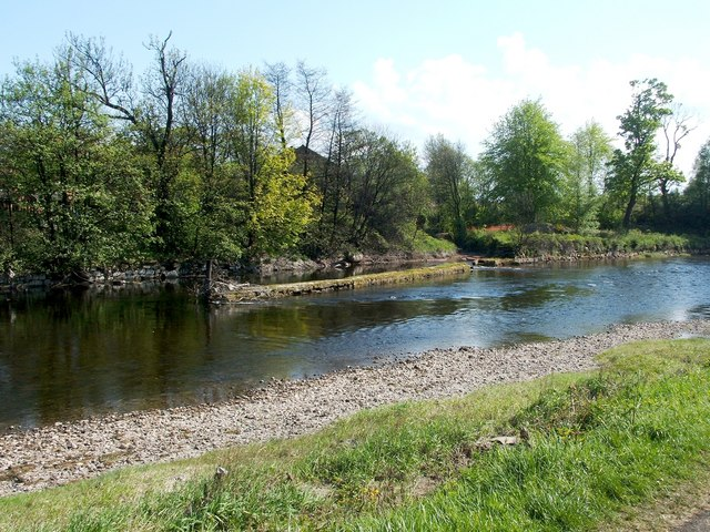 A skimmer in the River Leven