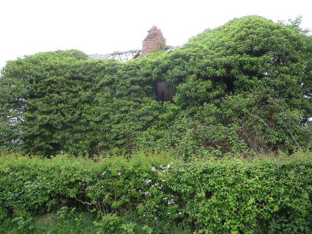 Overgrown property near Park Farm