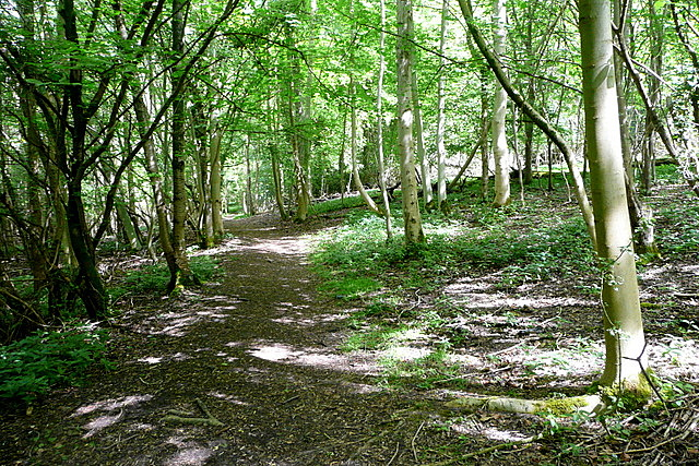Footpath in Mousell's Wood