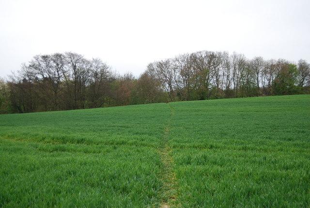 High Weald Landscape Trail to Rolvenden Layne