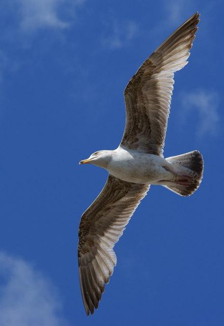 Gull at Brighton, Sussex