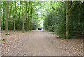 SZ3598 : Forest Track through Norley Inclosure by Mike Smith