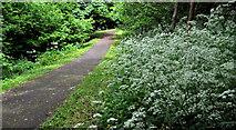 J3481 : Path, Glas-na-Bradan, Newtownabbey (3) by Albert Bridge