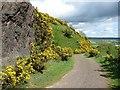 NS8597 : Basalt crag above Menstrie by Richard Webb