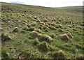 SX5677 : Moorland below Great Mis Tor by Derek Harper