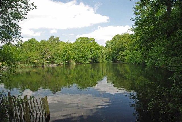 Top Lake Danbury Country Park