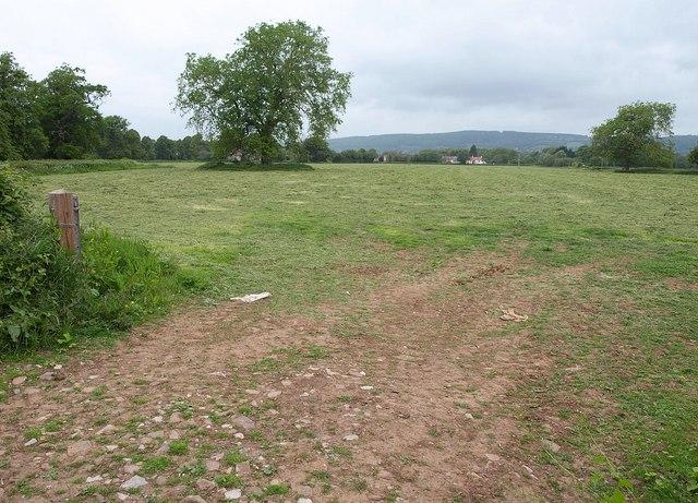 Field by Langford Lane