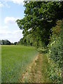 TM3761 : Bridleway to Deadman's Lane by Adrian Cable