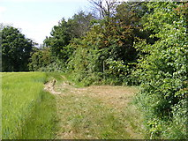 TM3761 : Bridleway/Footpath junction by Adrian Cable