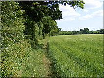 TM3761 : Bridleway to the A12 Benhall Bypass by Adrian Cable