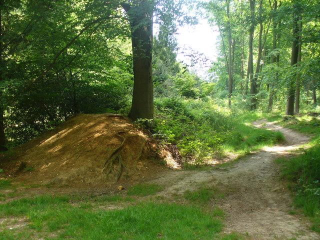 Park Pale, Chawton Wood