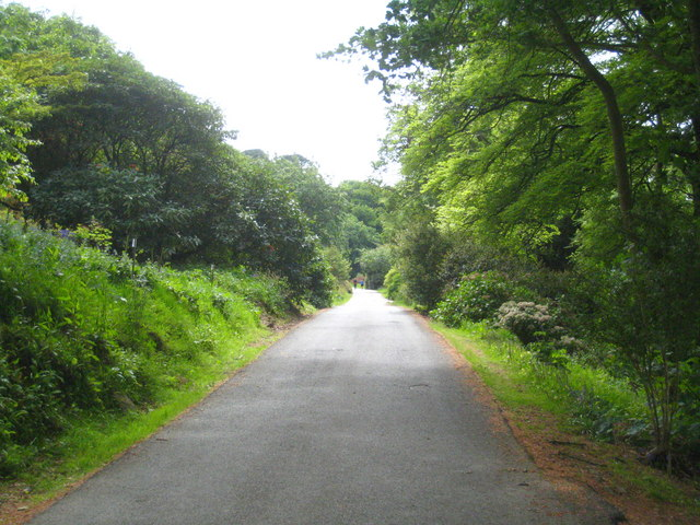 The main drive on Caerhays Estate