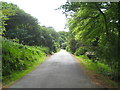 SW9642 : The main drive on Caerhays Estate by Rod Allday