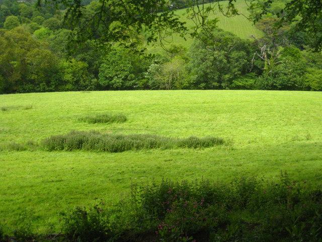Pasture on the Caerhays Estate