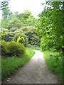 SW9641 : A footpath on the Caerhays Estate by Rod Allday